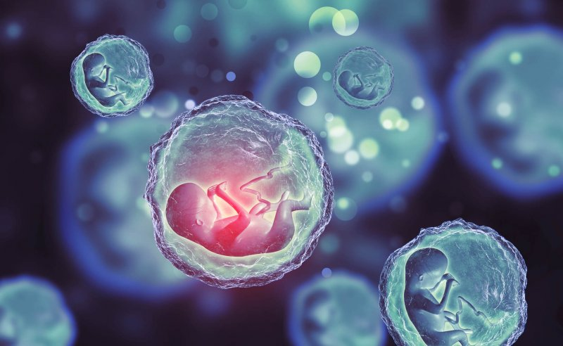 artificial embryo structures show insight into fetal development