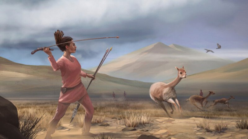 In this illustration based on new archaeological finds, ancient hunters in the Andes Mountains surround their prey, wild relatives of the alpaca called vicuña. Credit: Matthew Verdolivo/UC Davis
