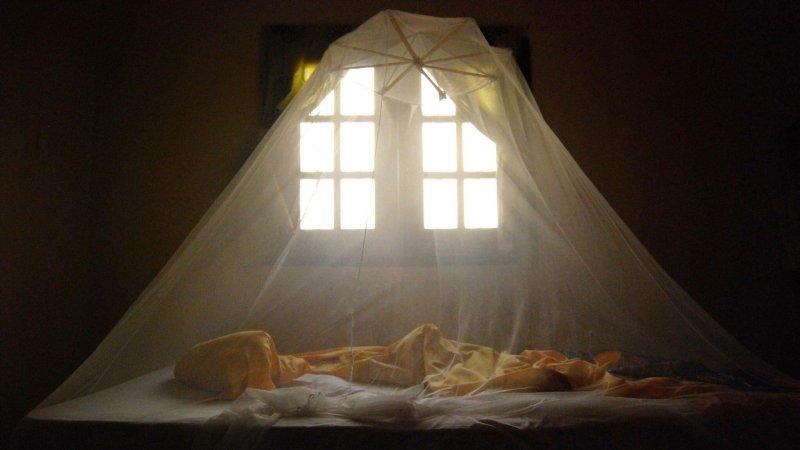 bed net x