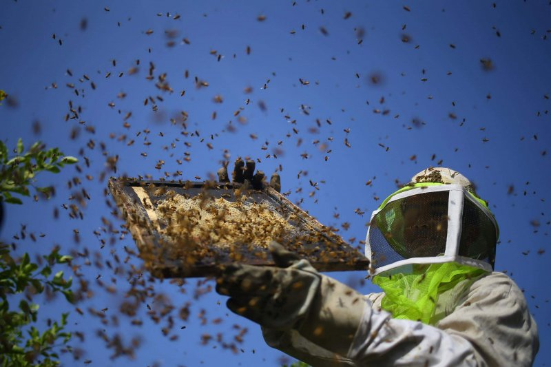 bee population decline