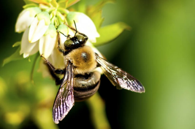 bees corn syrup colony collapse