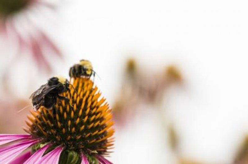bees uwash
