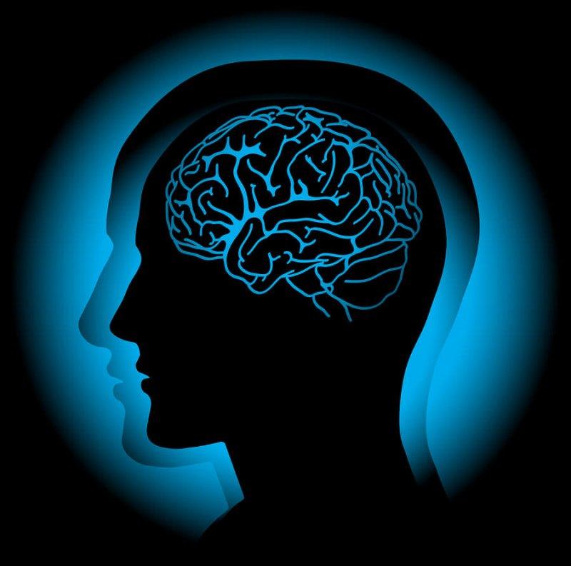 bigstock Brain