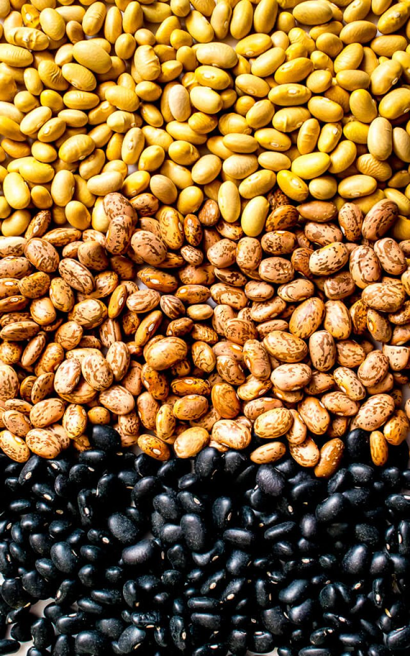 black pinto canary mexican beans