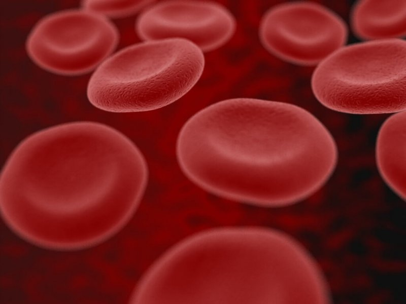 blood cells by RATusus CC BY e