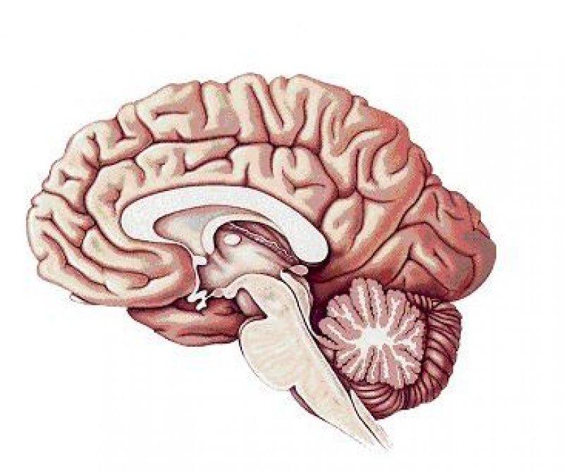 brain alz