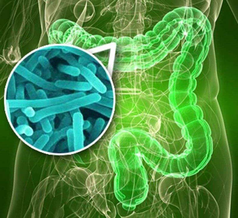 buenas bacterias intestinales