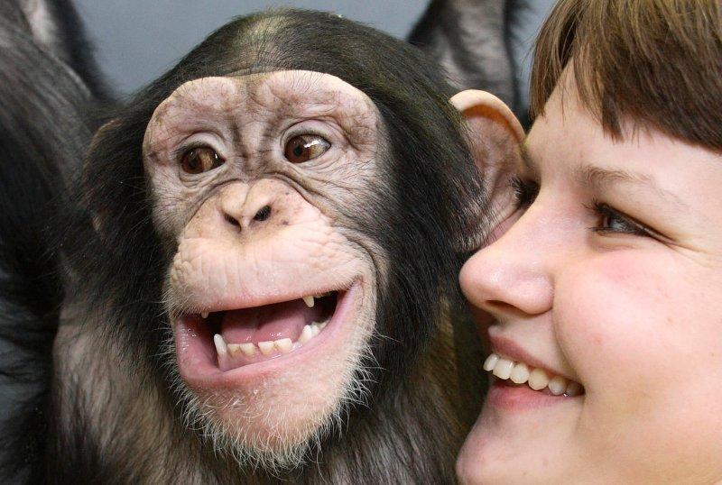 chimpanzee and human