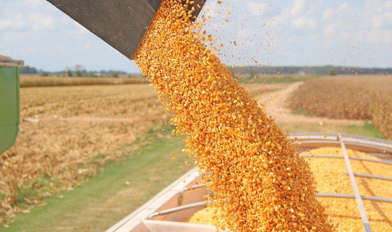 cornharvestdfp