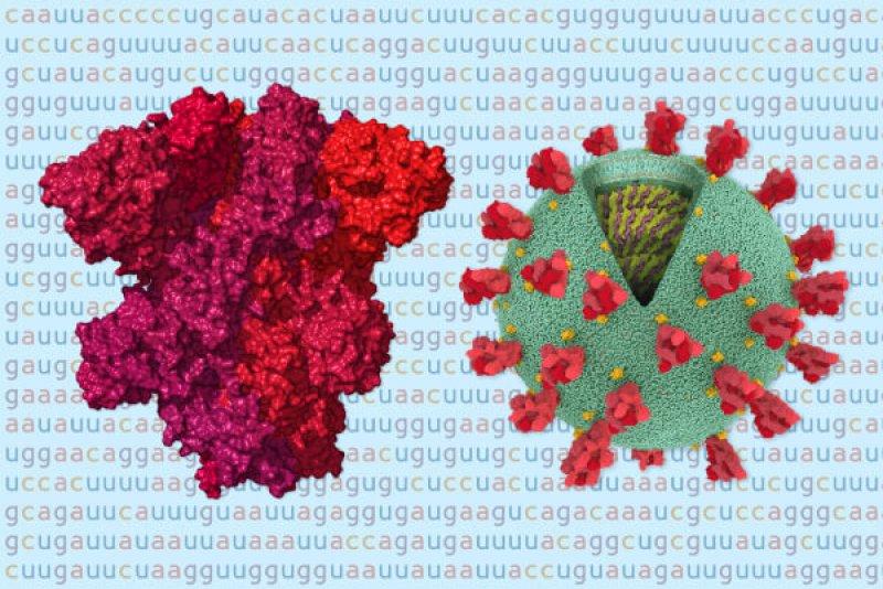 coronavirus genome bad news wrapped in protein promo threebytwosmallat x