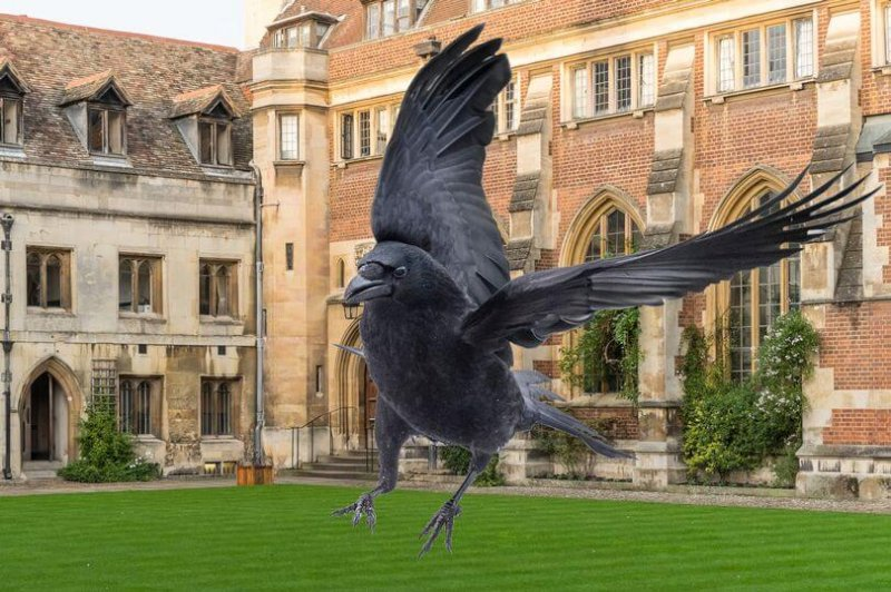 crow at pembroke