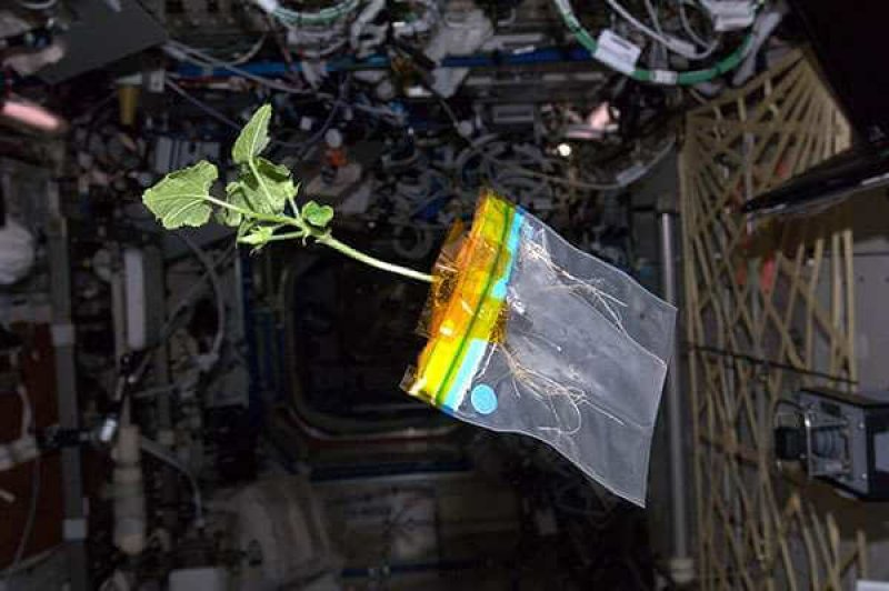 diary of a space zucchini