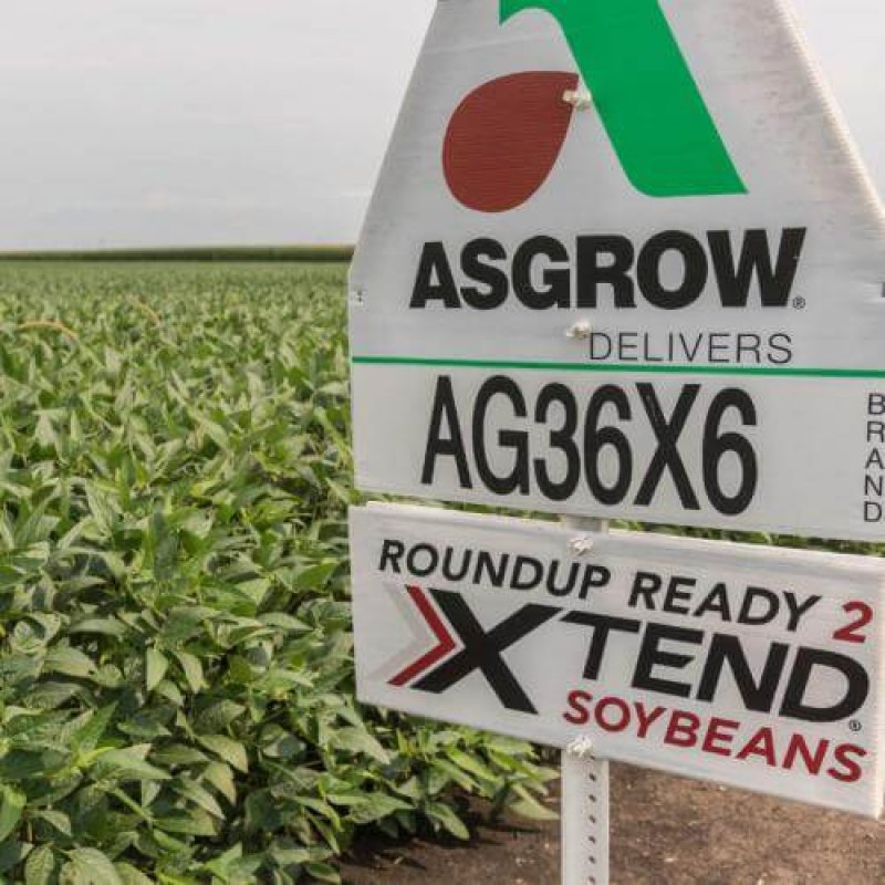 dicamba soybeans