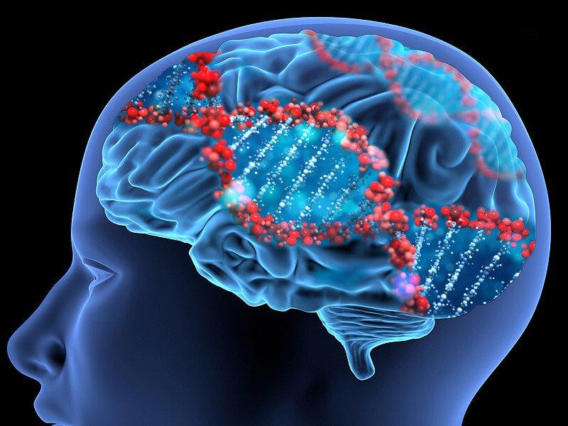 dt brain dna genes x