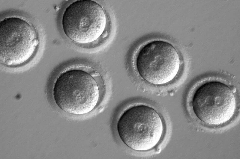 embryos custom c e db ce c f df de ef e s c