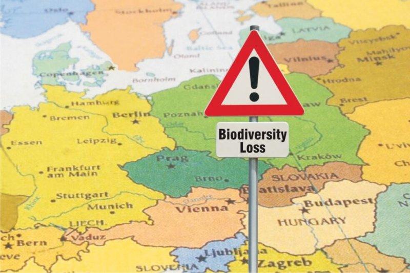 Credit: Euro Wildlife