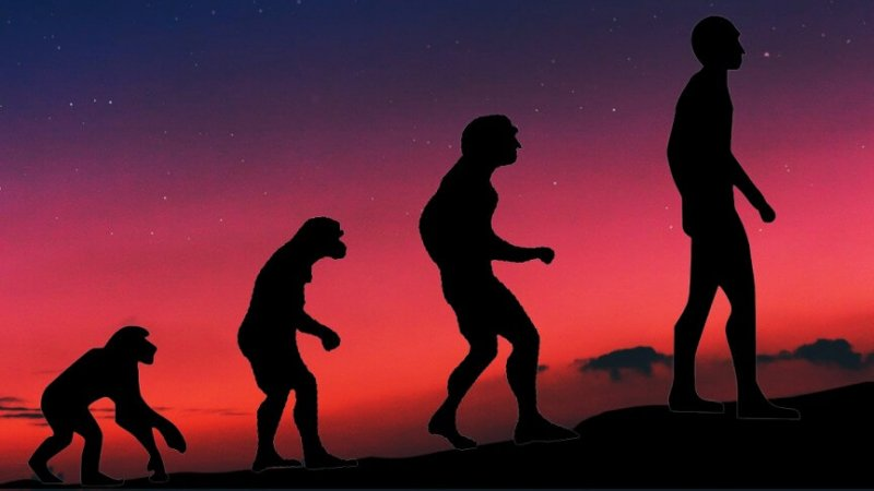 evolutionmain md
