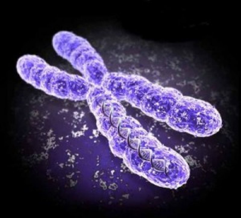 gene therapy chromosome