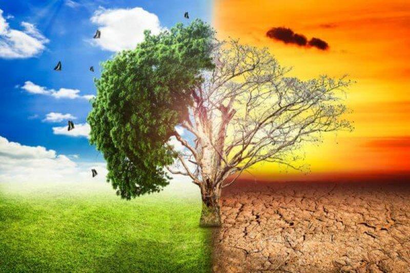 global warming climate change tree big stock x