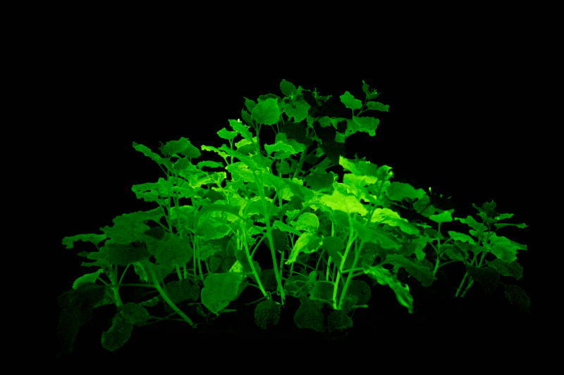 glowing plants side view