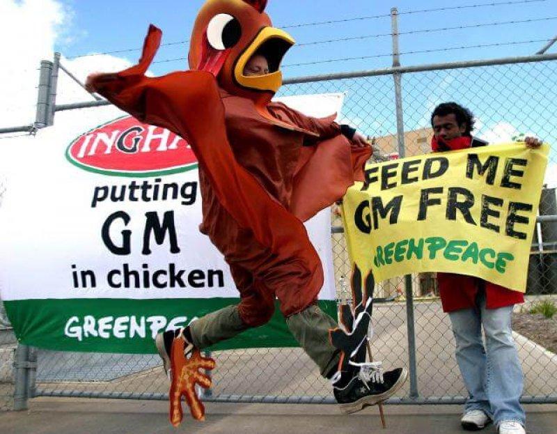 gm animal feed