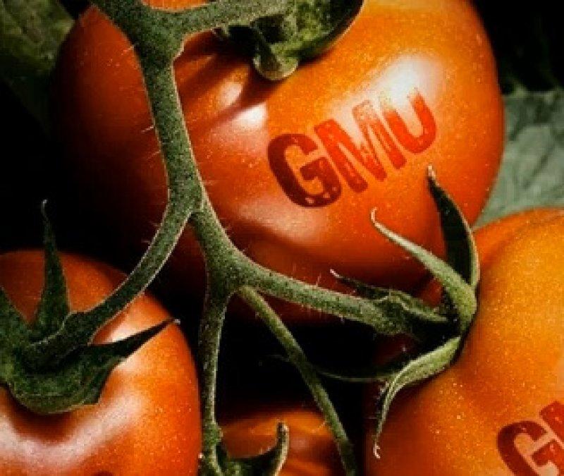 health ranger GMO