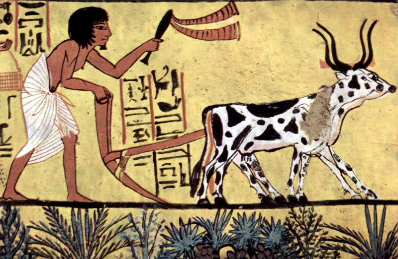Ancient Egyptian plowing farmer scene from the burial chamber of Sennedjem. Credit: The Yorck Project