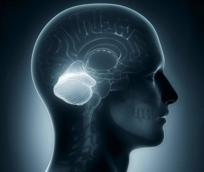 human brain cerebellum