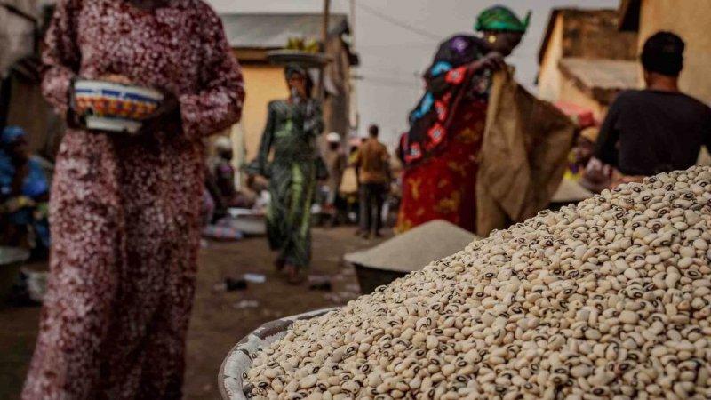 Ghana recognizes crop biotech as 'vital tool' in food security battle