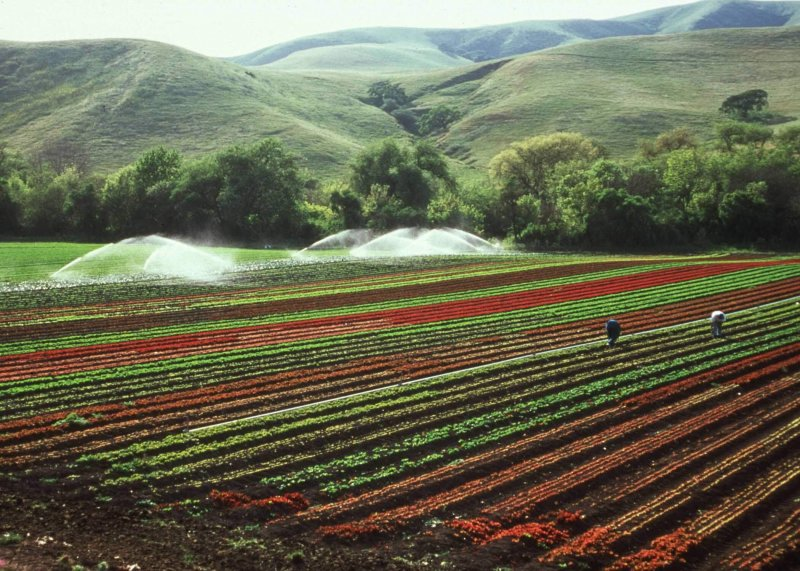 lettuce foothills