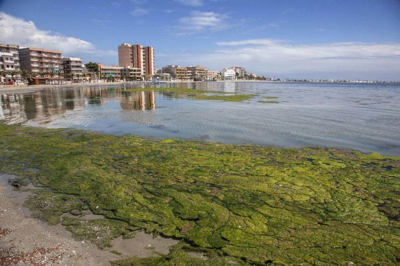 Algae blooms in Mar Menor. Credit: J. M. Rodrigues/AGM