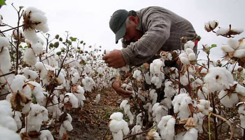 Growers in Mexico resort to illegally planting gmo seeds. Credit: ApparelViews.com