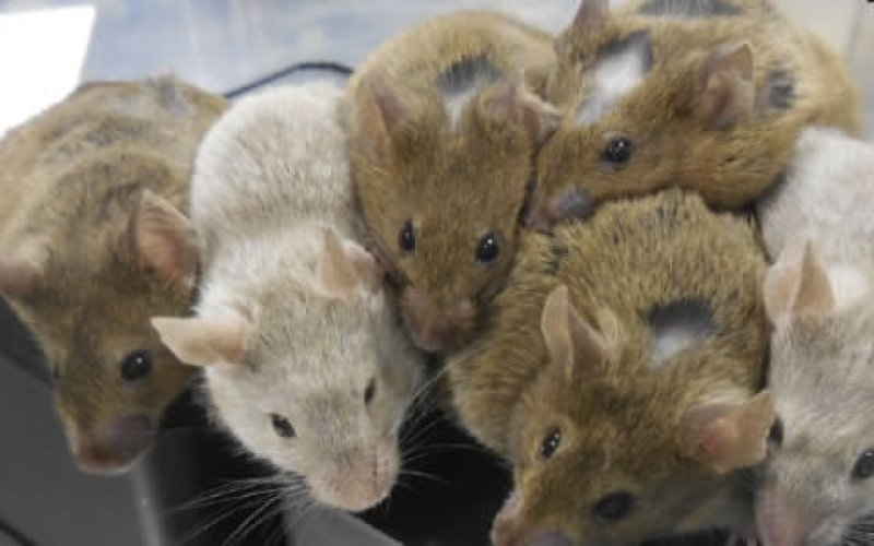 mice medium transkzRVrpaG pgYx zuruU oKJY TXo fhl vLmN AP E