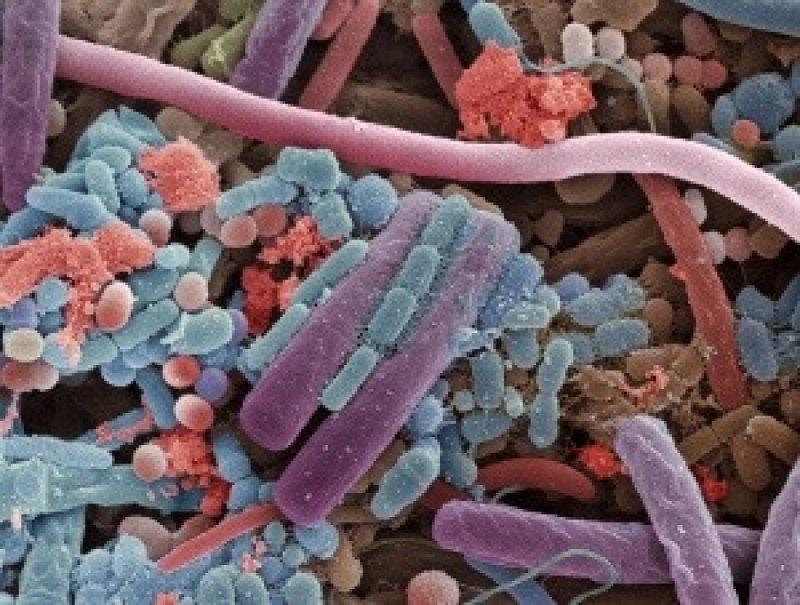 microbiome hero