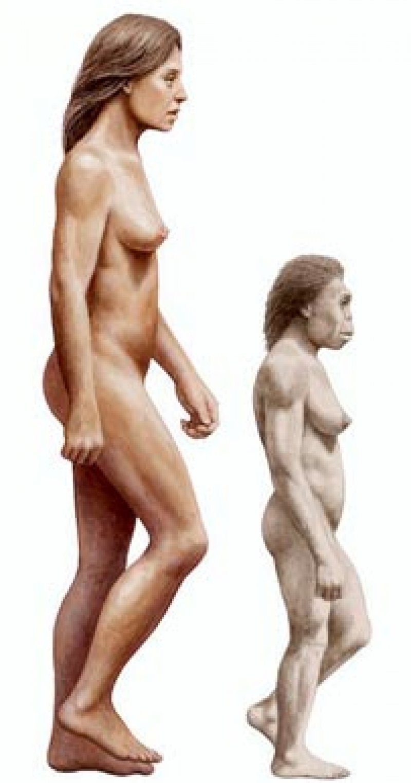 modern human comparison homo floresiensis