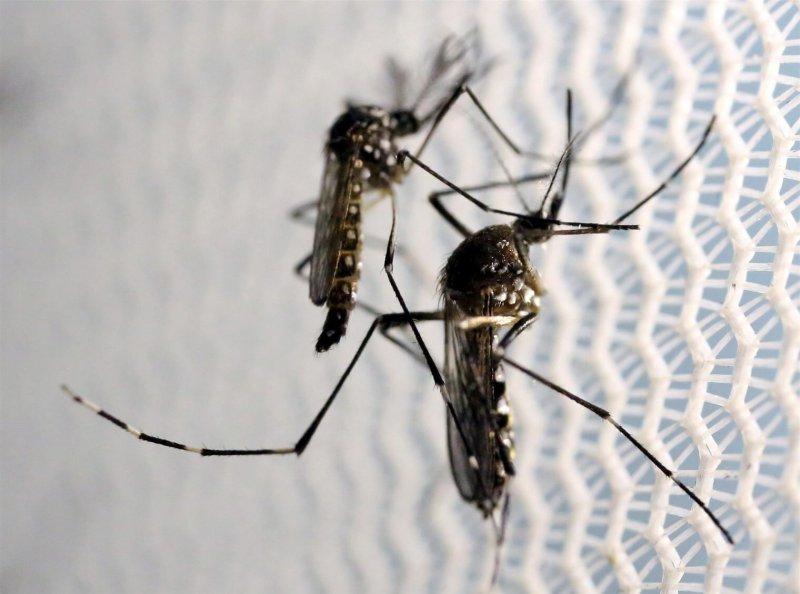 mosquito jm ae cf e d c cd fit w