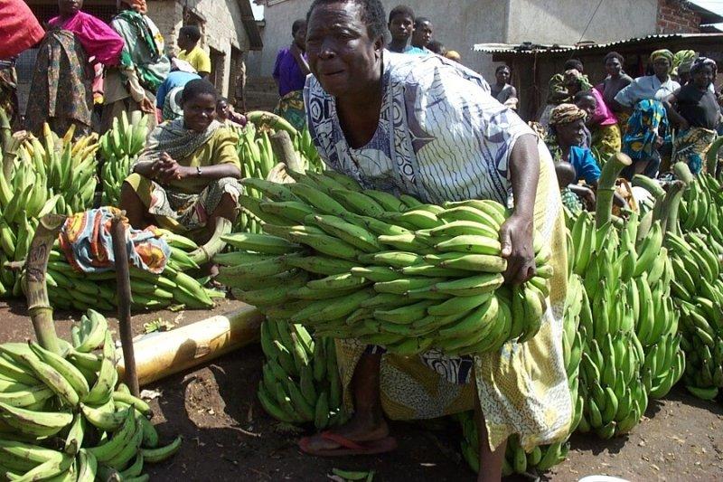 mwanamke akinyanyua mkungu wa ndizi katika soko la tukuyu