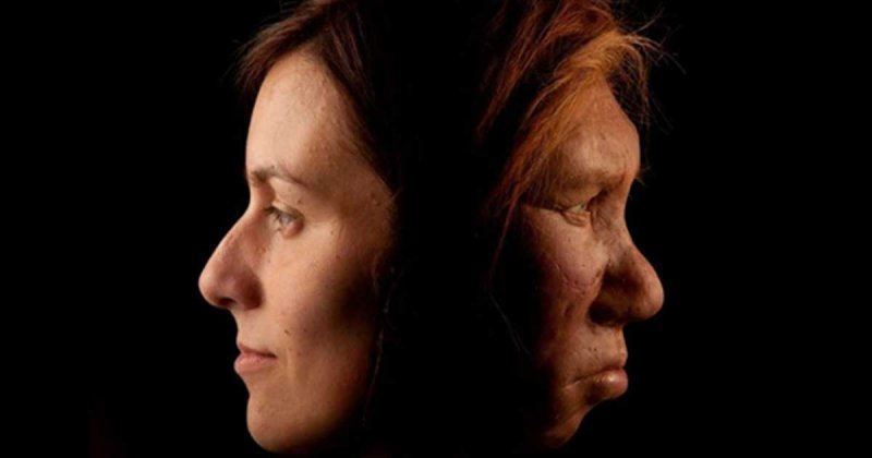 neanderthal dna makes up about of the modern human genome