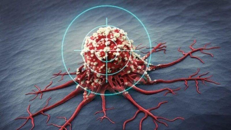 new drug combo could help immune cells target and destroy cancer cells