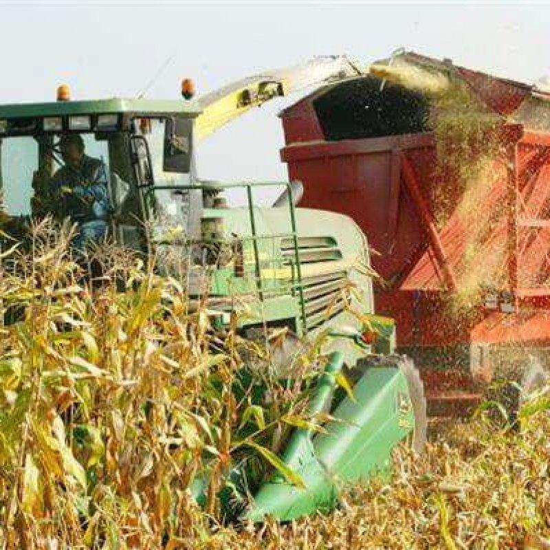 north gower farmer harvests corn destined cattle f e