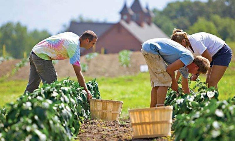 organic farming reduces fertilizer