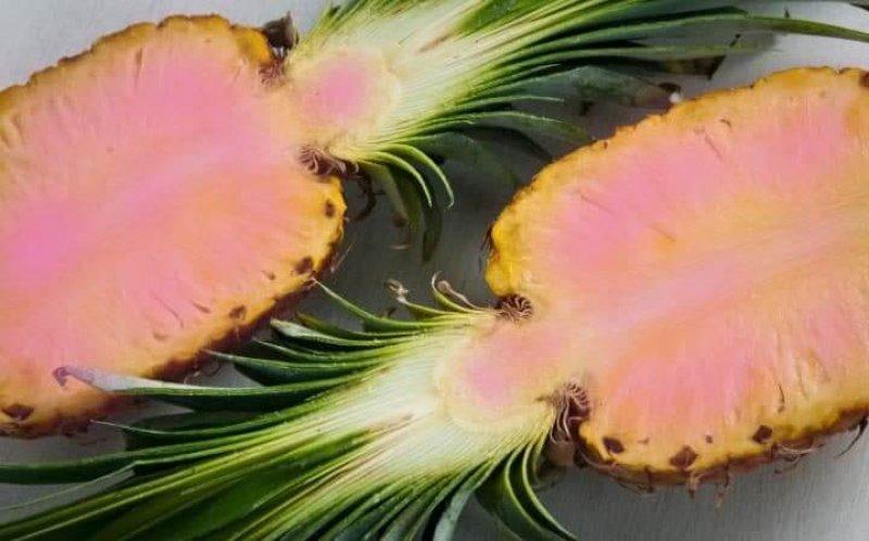 pink pineapples large trans NvBQzQNjv BqZyr RvqrFlHdIeGHHfdSftEH OcCRr LCPLLce HYHo