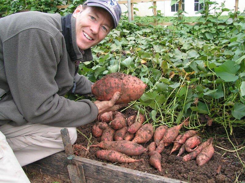 potatoharvest f