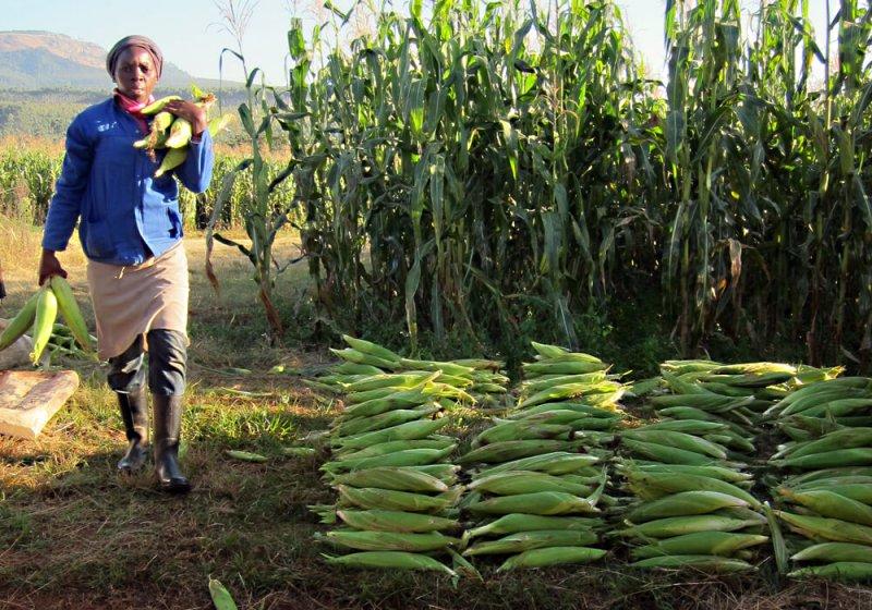 south africa farm