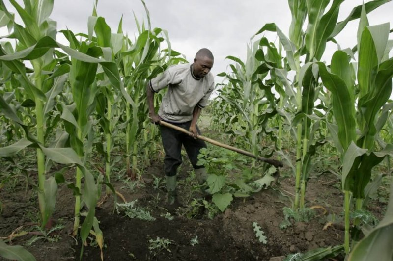 south africa is maize production saved x