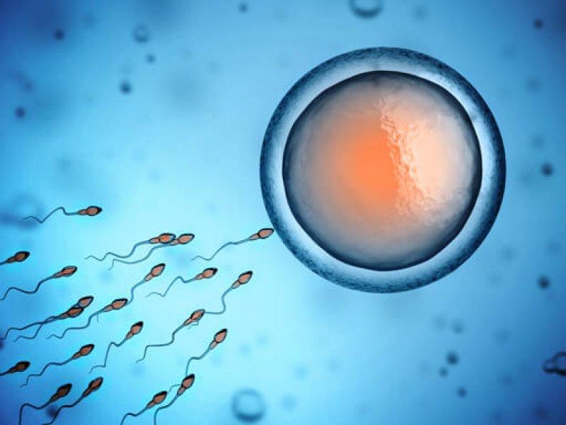 sperm and egg
