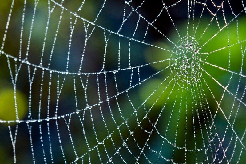 spiderweb x