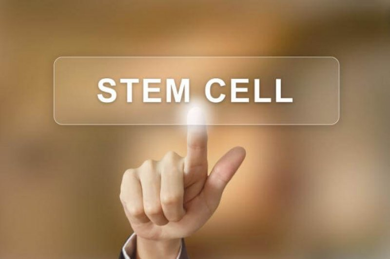 stem cell on a screen