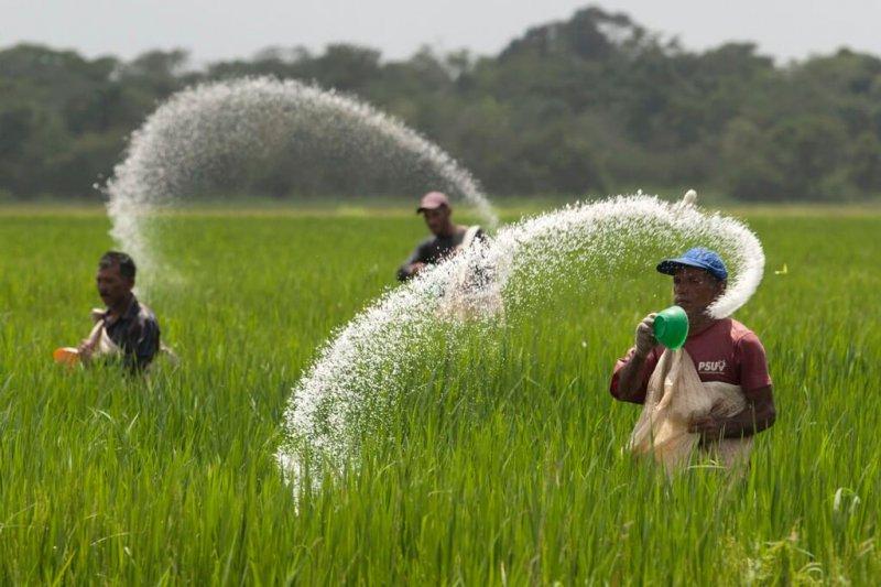 urea fertilizr