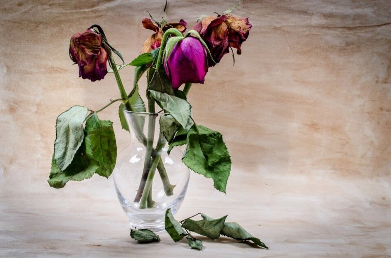 valentines dead roses